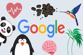 آشنایی با الگوریتم های گوگل و تاثیر آن بر نتایج جستجو